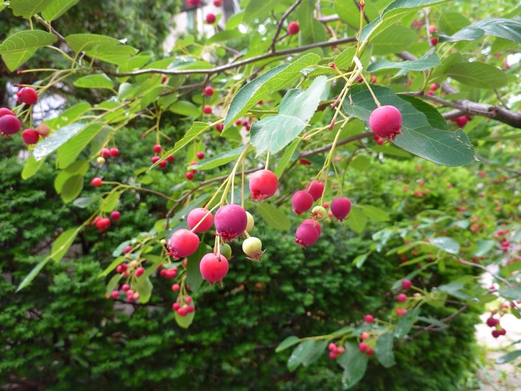 Eco Printing Synthetics With Serviceberry Threadborne